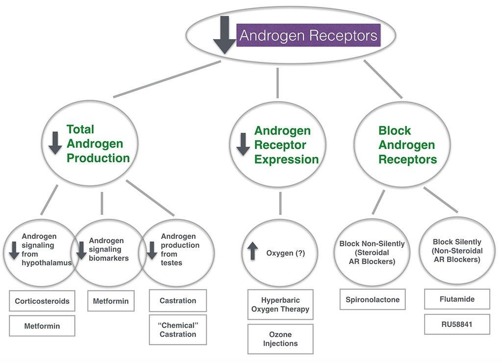 sarms androgen receptors